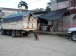 The Monkeys of Misahualli